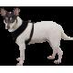 Dog harness